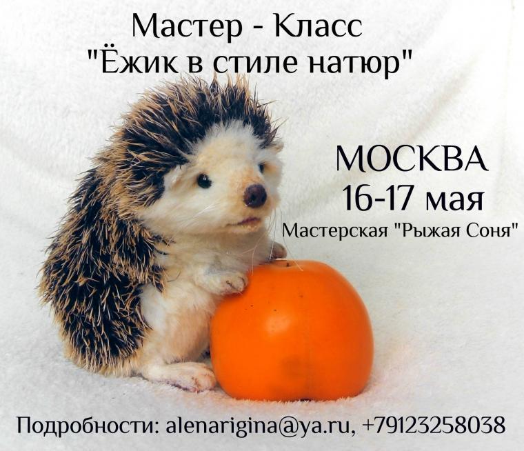 ёжик, мастер-класс, москва, обучение