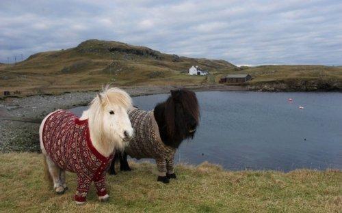 Пони Фивла и Витаминка приглашают в Шотландию (7 фото + 1 видео)