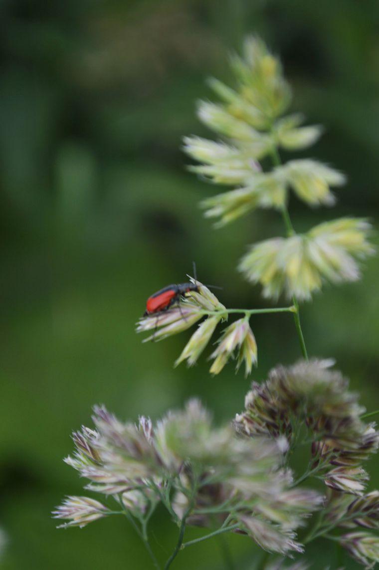 лето 2016, лето, растения, насекомые