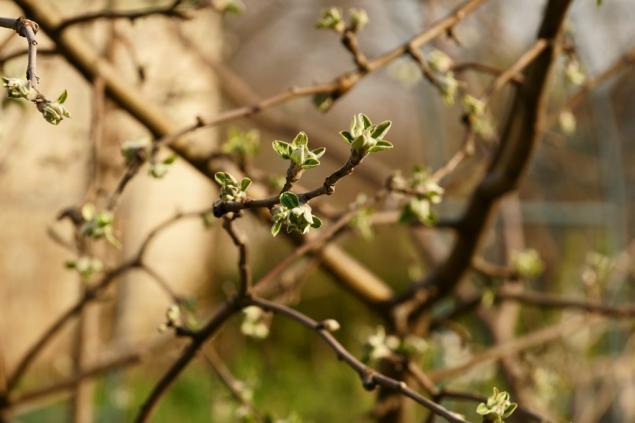 весна, май, улыбка