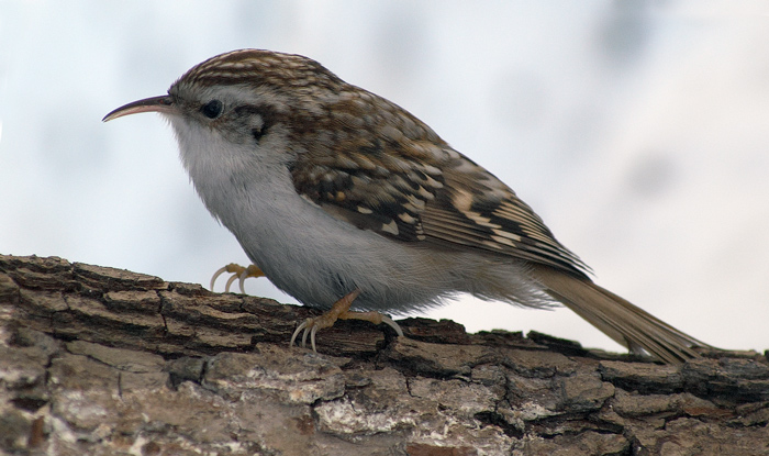 Каждой птице свой дом, фото № 18