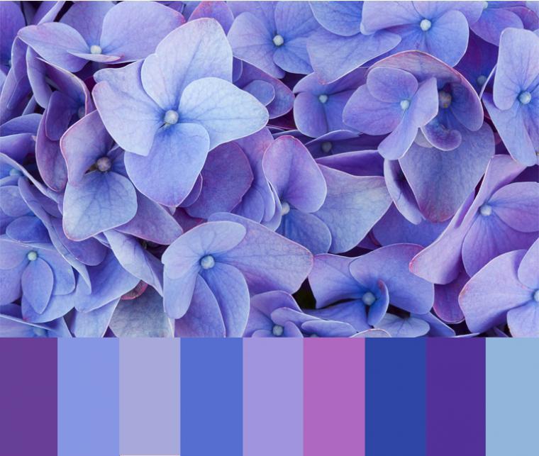 этой причине картинки синих и сиреневых цветов экспансии этого блюда