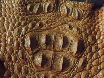 кожа крокодила, кожа рептилии