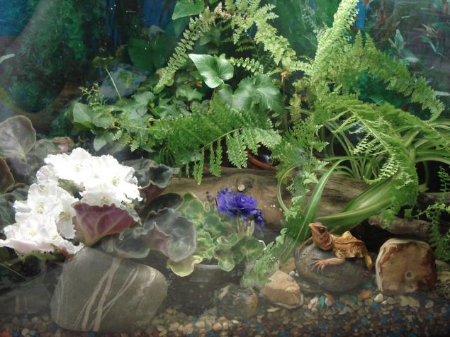 Сделанный не в саду а в аквариуме
