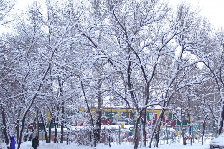 ягоды, снег