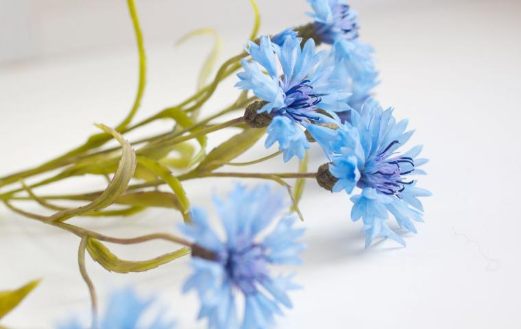 лепка цветов, пион, подснежник