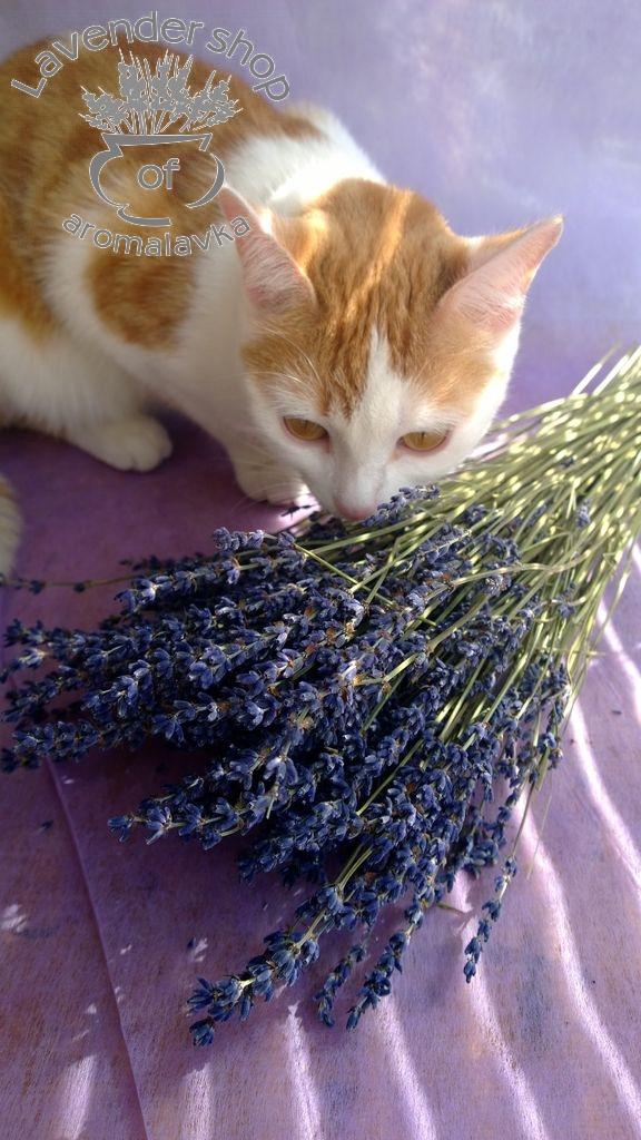 фото, lavender
