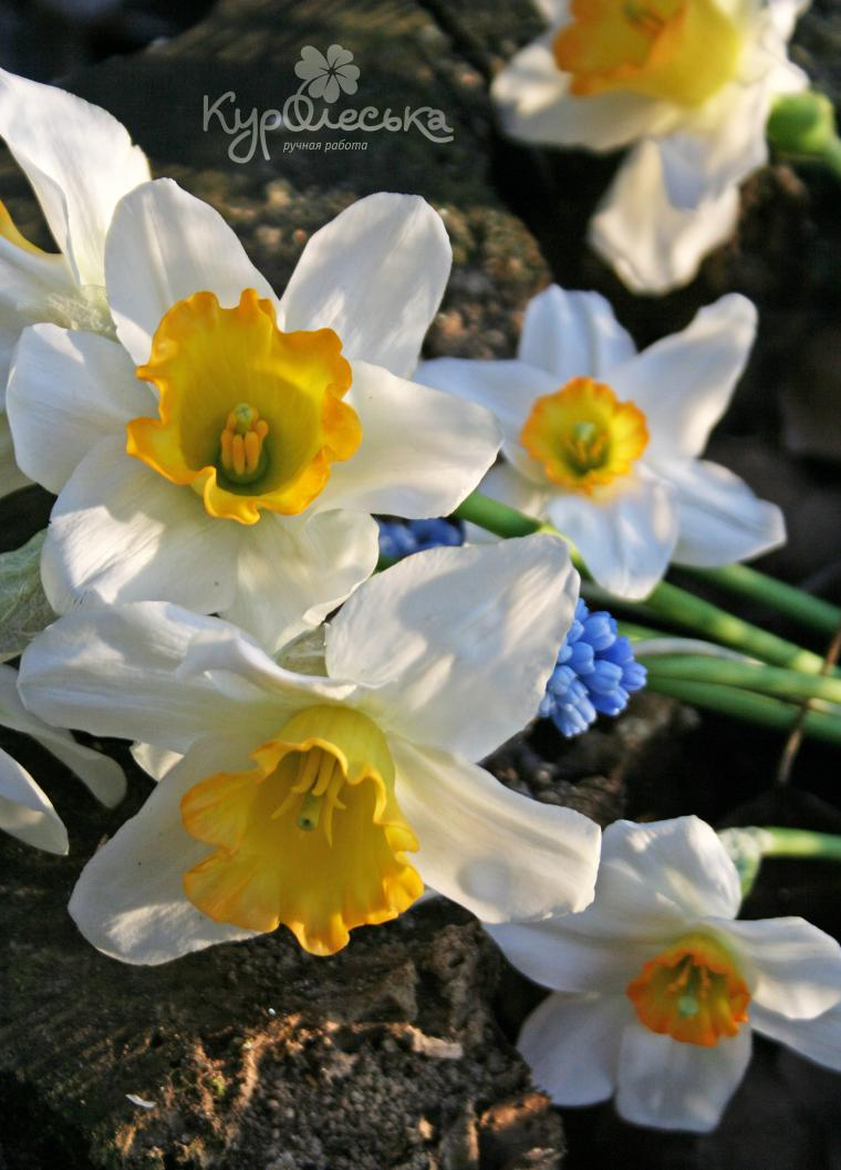 реалистичные цветы, холодный фарфор