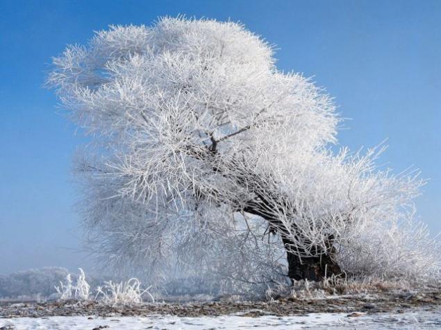 Морозной зимой, фото № 2