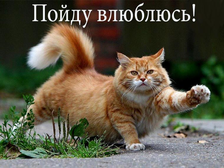 весенний, мартовский кот
