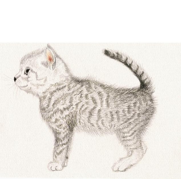 Рисунки животных серым карандашом