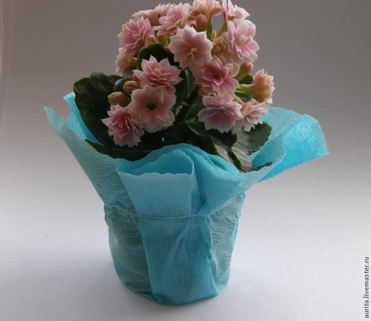 Цветы в горшках фото оформить