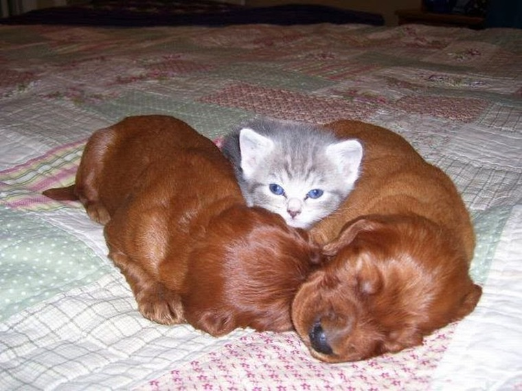 картинки с котятами смешные и милые и щенками зависимости