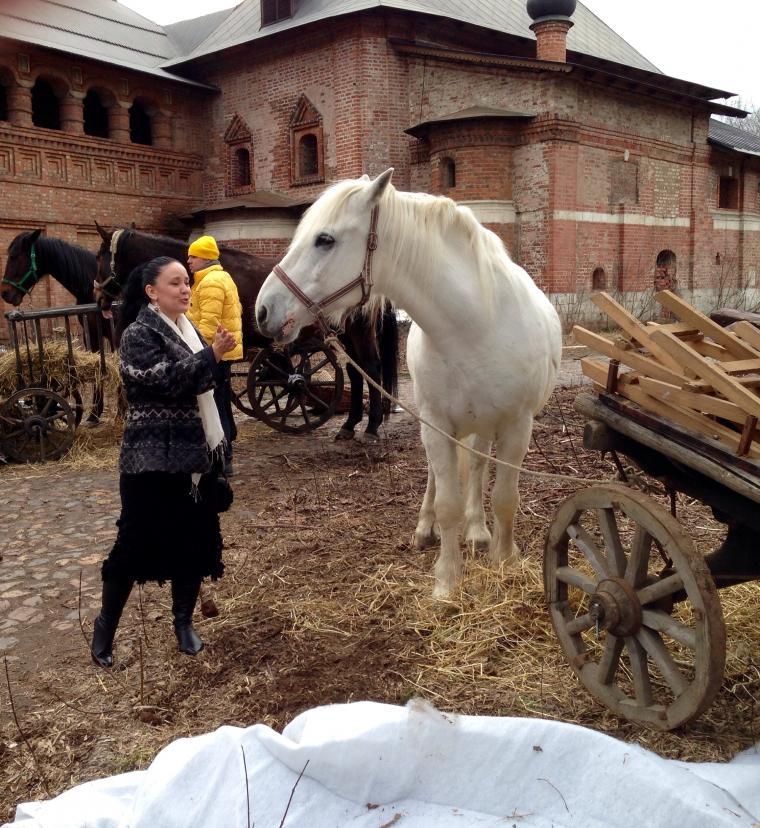 Фото лошадей осенью