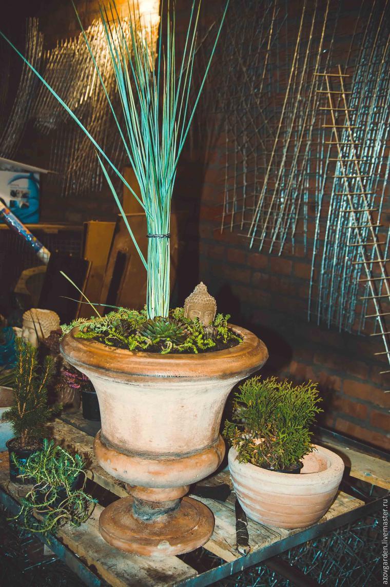 очиток, растения
