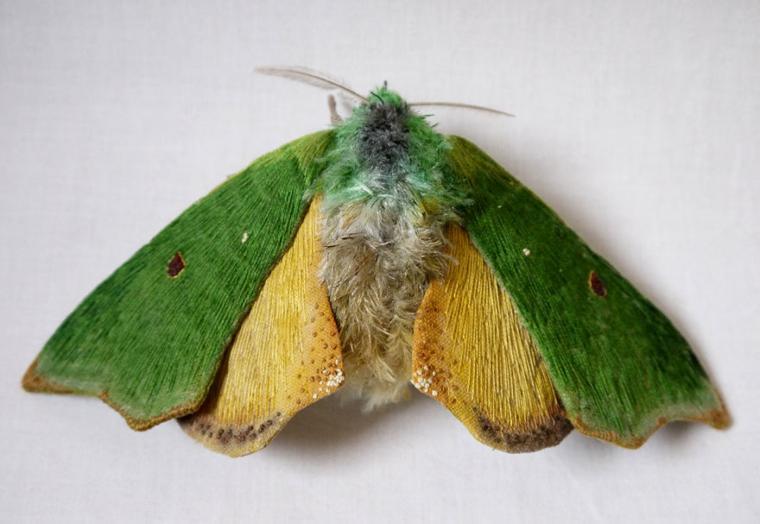 Текстильные шедевры, или Бабочки как источник вдохновения, фото № 25