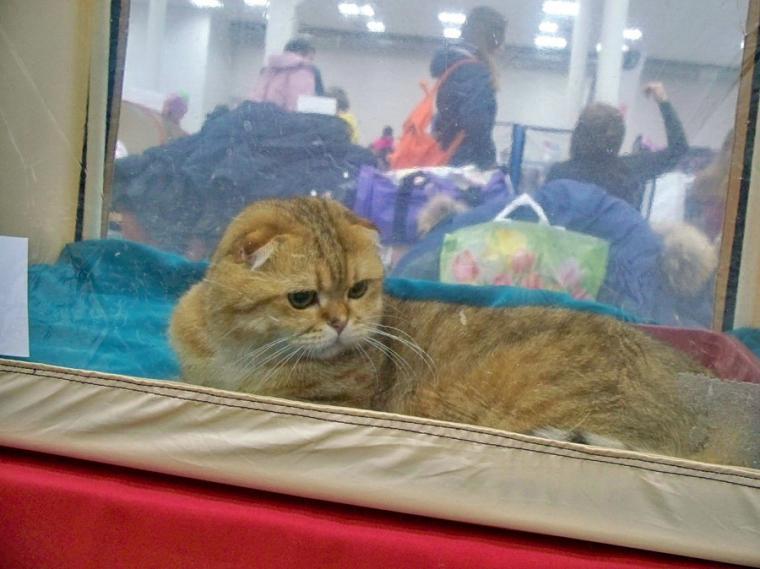 О жизни: Флудилка: Выставка кошек