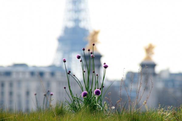 Весенний Париж, дыхание теплого ветра, фото № 34