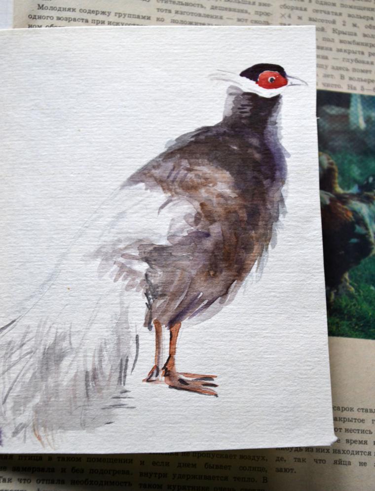 птицы-броши
