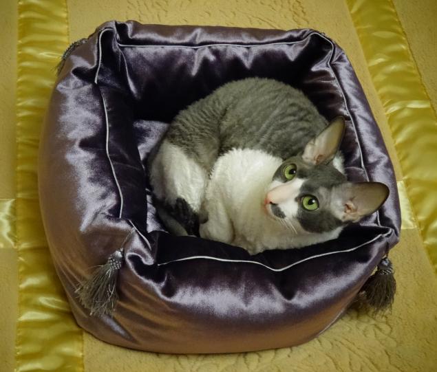 cotmuar, домики для котов, кошка