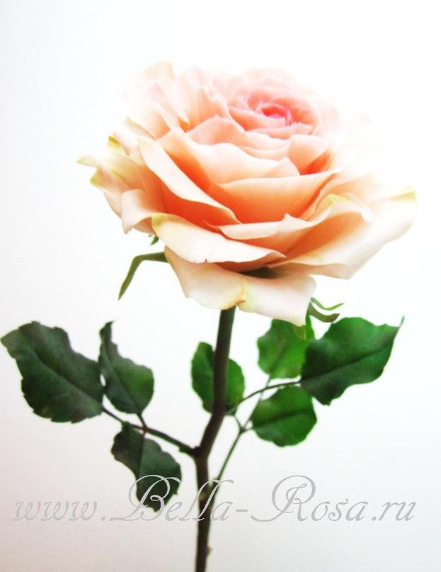 мак, белла роза