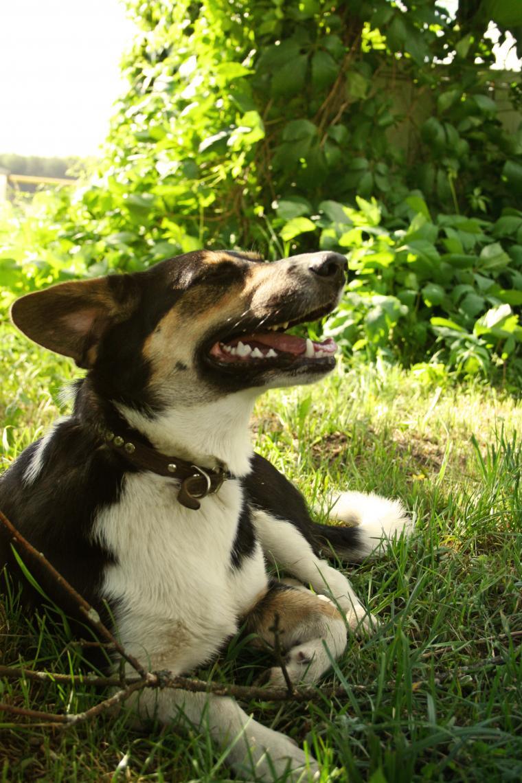 пёс, друзья, любовь к животным, дворняжка, счастье