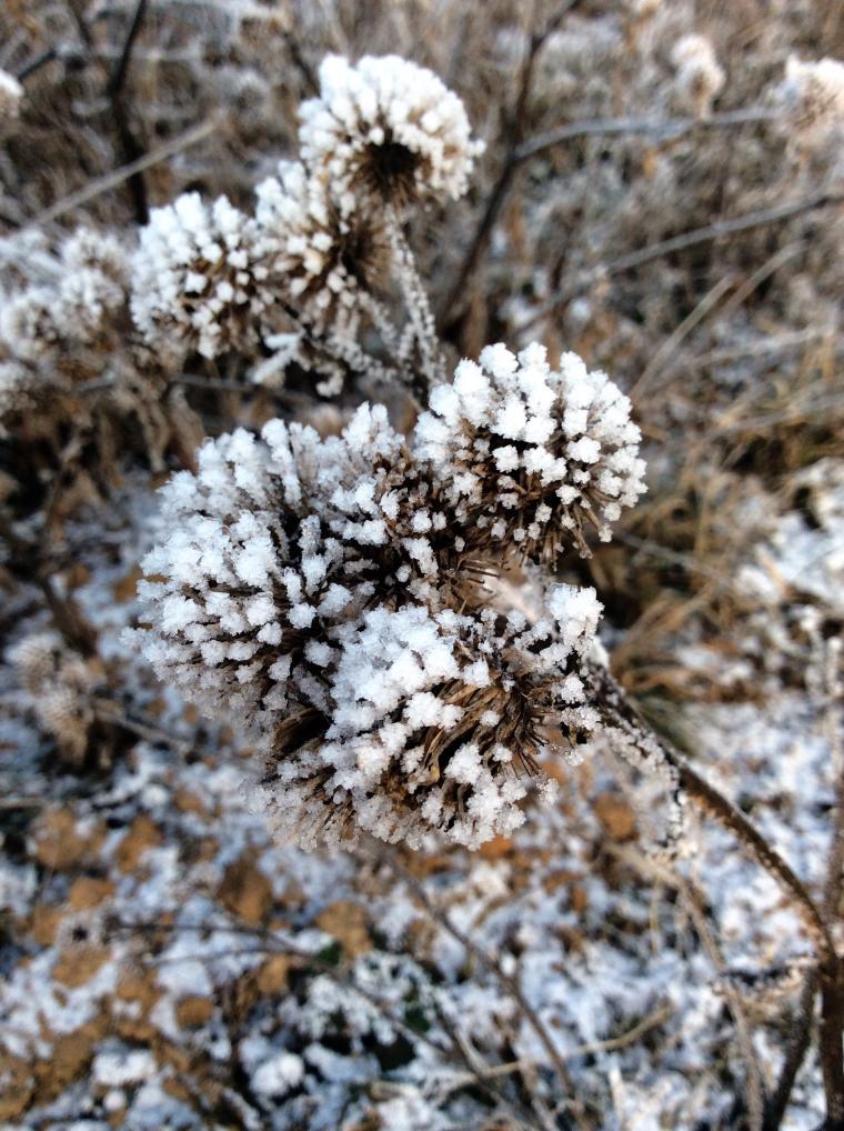 художница зима