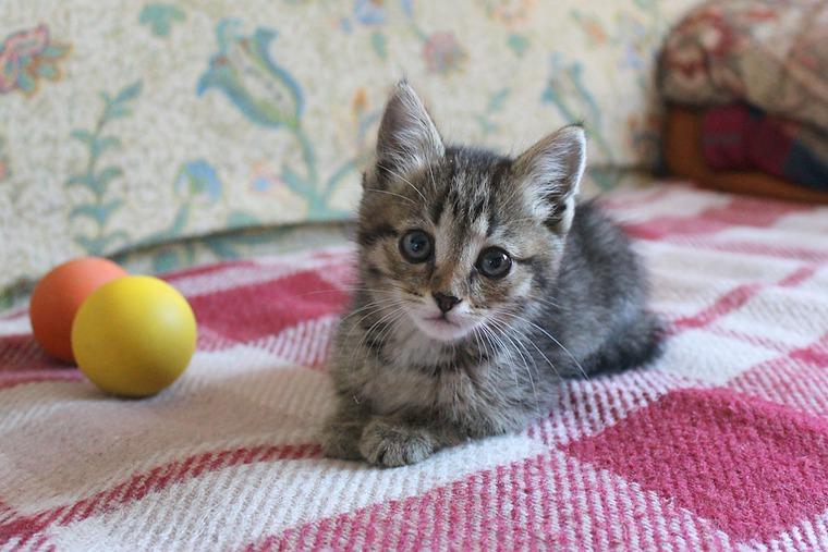 кошка ищет дом, в добрые руки, сюрприз