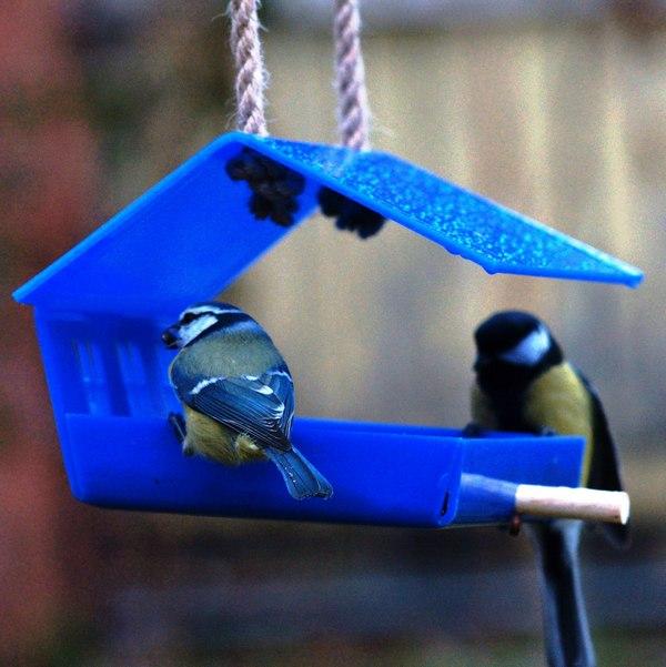 кормушка, подкормка птиц, природа, синицы, участок