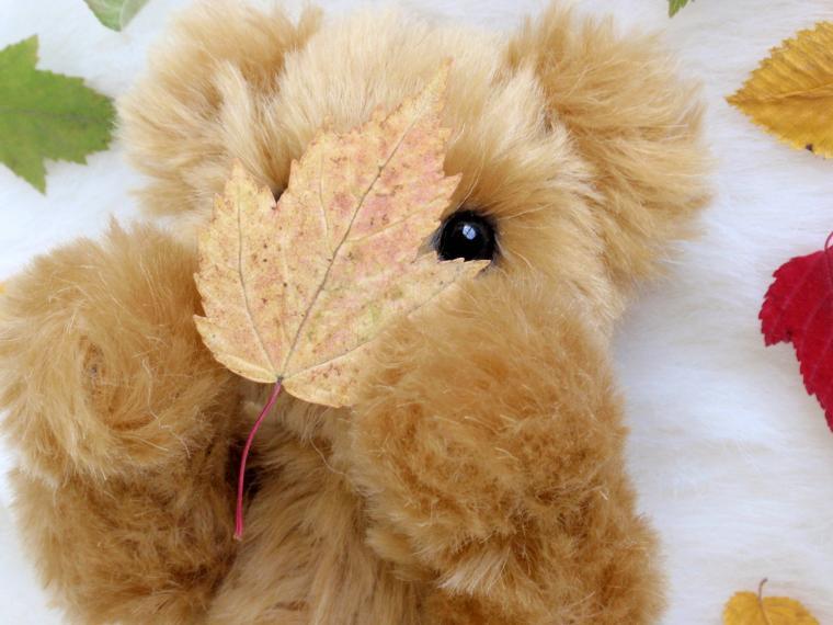 осень, листики, тедди