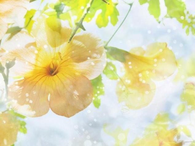 цветы, картины по фото