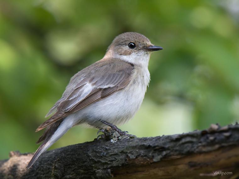 Каждой птице свой дом, фото № 12