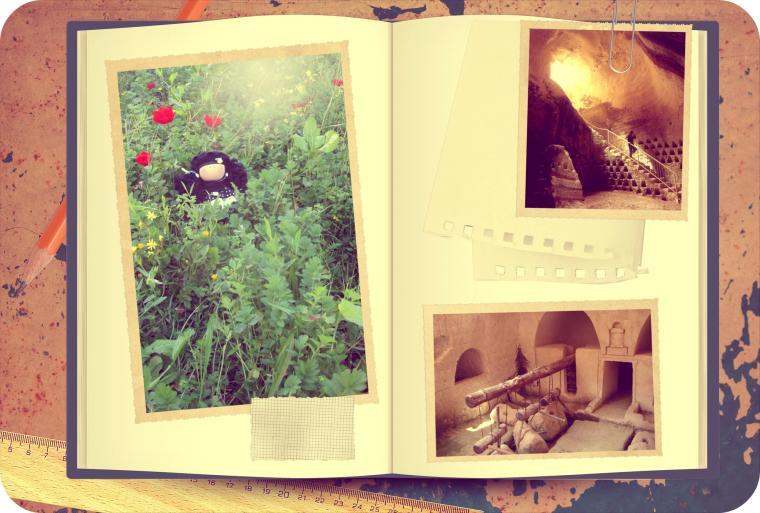 путешествие кулы розы, национальные парки, январские анемоны, под охраной юнеско, мареша-бейт-гуврин