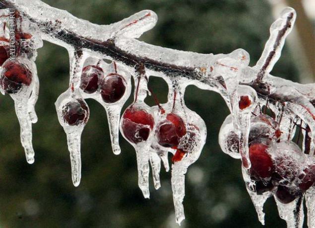 Морозной зимой, фото № 20