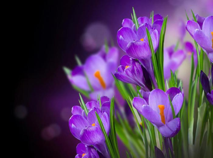 поздравляю, поздравление, 8 марта, женщина, подарок, весна