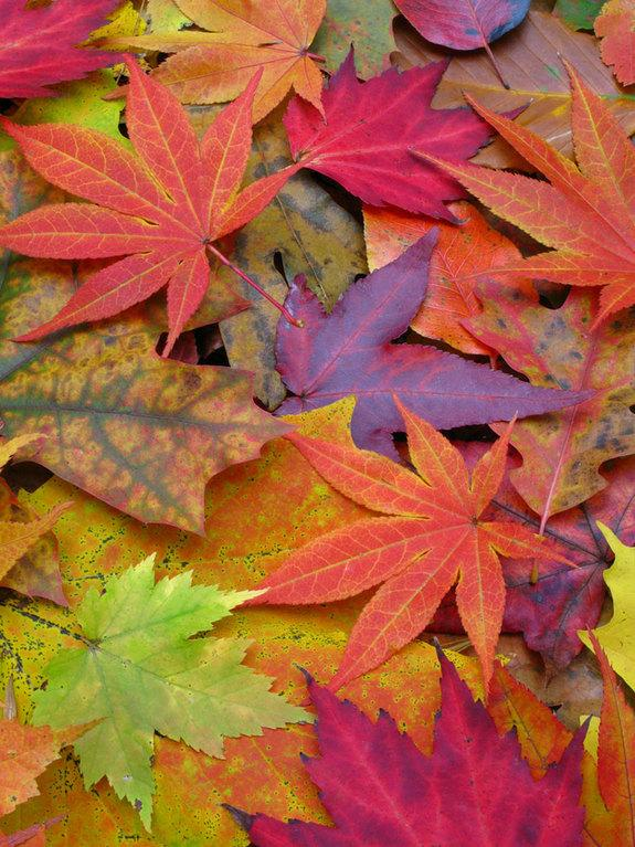 Stock image of color autumn leaves