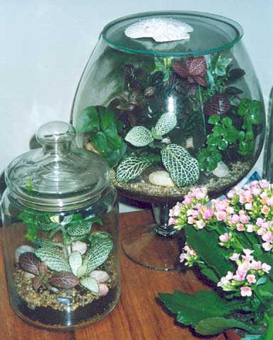 мастер-класс, мастер-класс по цветам, горшечные растения, флористика, мини-садик, растения