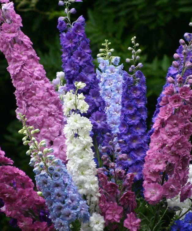 Прекрасные и ужасные! 13 смертельно опасных цветов и кустарников., фото № 11