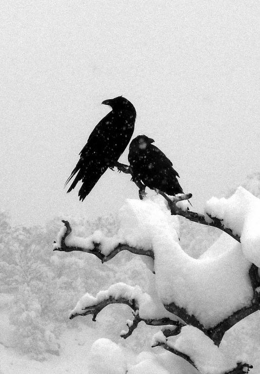 зимнее украшение, птицы