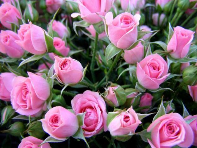 Песня цветы живые теплые хмельные доставка цветов рига фрезии