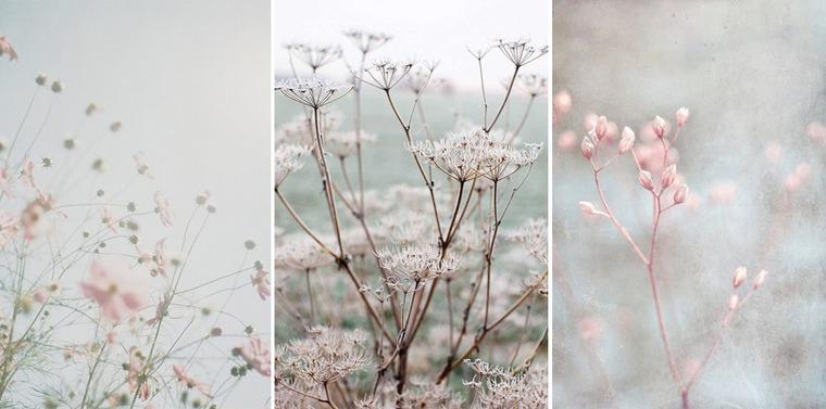вдохновение цветами