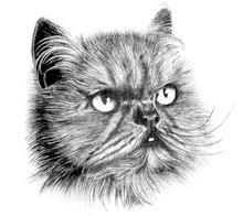 курс рисунок карандашом, оисование