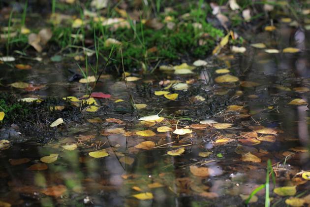 осень, сказки пушкина