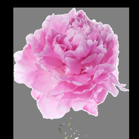 цветы, знаки зодиака, соответствие, футболки с цветами, акция цветочная, скидка