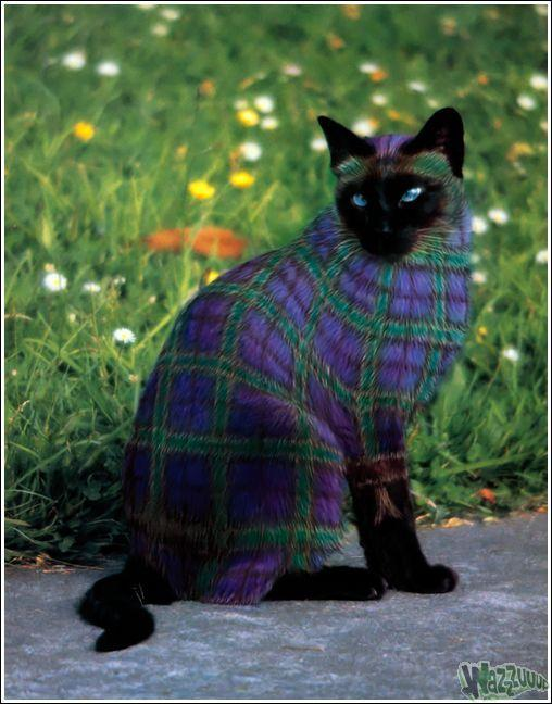 Зачем красить кошек?, фото № 22