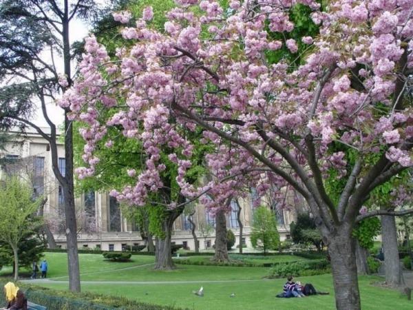 Весенний Париж, дыхание теплого ветра, фото № 13