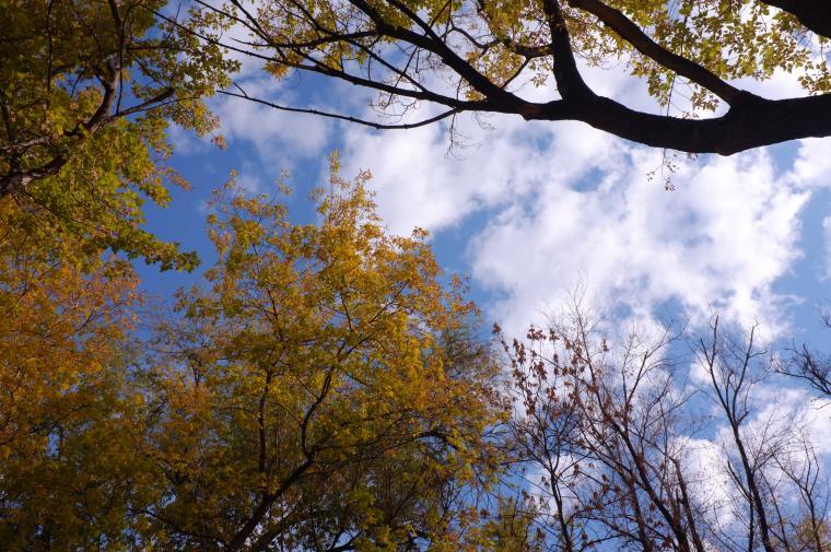 Осенние самарские прогулки - фотоотчет, фото № 3