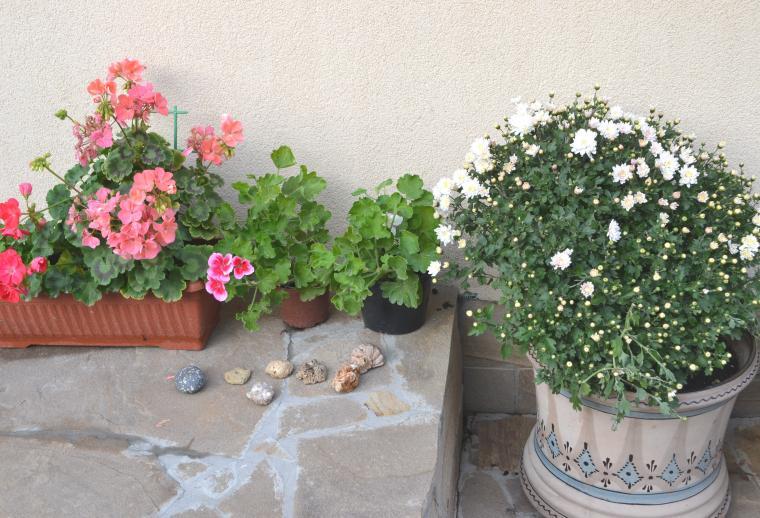 живопись, хризантемы