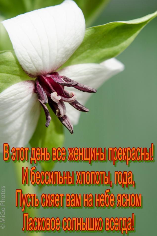 8 марта, праздник, поздравление, поздравляю, женский день, цветок, фотография, фото