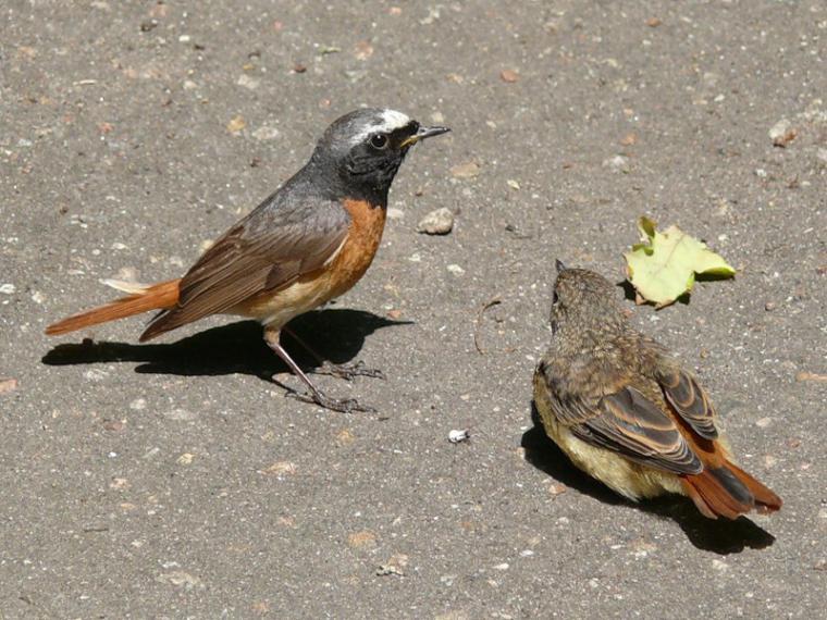 Каждой птице свой дом, фото № 14